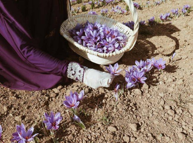 saffron dipanen