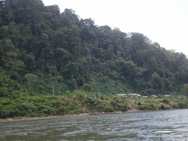 Hutan Lindung Sungai Sesayap, Kalimantan Utara