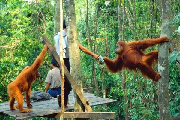 Taman Nasional Tanjung Puting, Pariwisata Indonesia