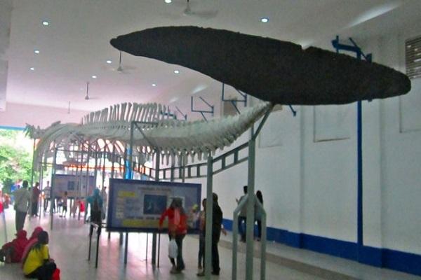 Wisata Di Museum Zoologi Pariwisata Indonesia