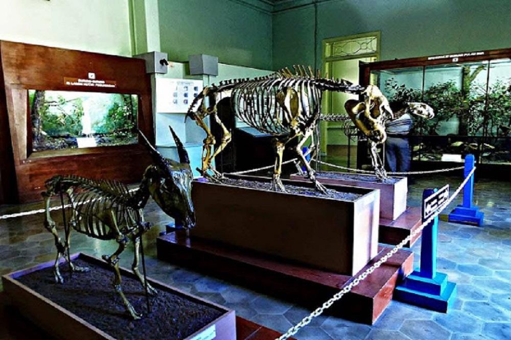 Wisata di Museum Zoologi